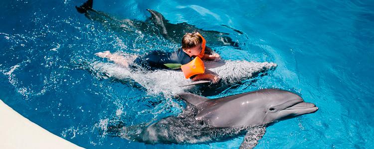 594_kopiya-dolphins-7-of-7